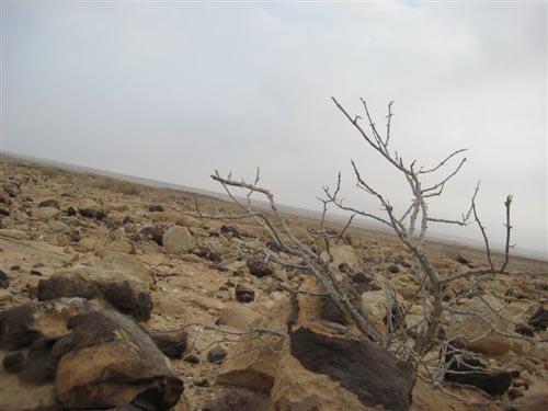 044_negev desert05